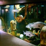 Reportage Vidéo avec MAREIS – Visite découverte  » de la mer à l'assiette ».