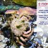 L'araignée de mer (Maja squinado)