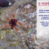 L'ophiure fragile (Ophiothrix fragilis)