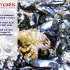 Le bernard l'ermite (Pagurus bernhardus)