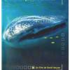 La semaine européenne pour les requins 2011