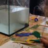 Je sculpte mon poisson